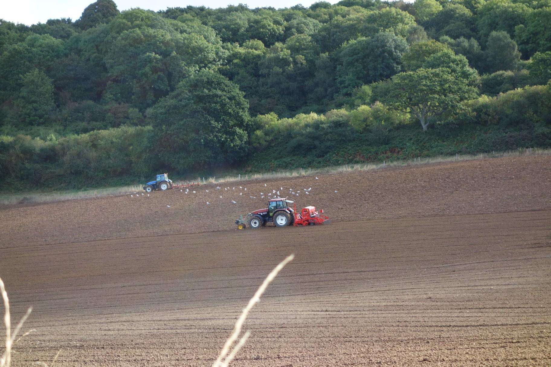 Seeding in Normandy